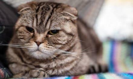 Kočičí válečný veterán: Nepotopitelný Sam